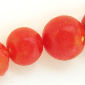 マイクロトマト自家採種! ホウレン草収穫! あじさいネギ!     「七夕きゅうり」企画です!