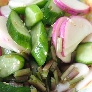あやめ雪の浅漬け! サラダミニ白菜定植! トレビスの様子! 「ジャスティス」ほうれん草収穫! 唐辛子の植え替え! マツバボタン!