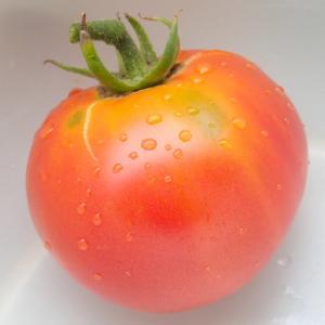 「世界一」トマト初収穫!  「ジャスティス」2番手ほうれん草収穫! 「セロリ」追加まき! 「サクサク王子ネオ』の天ぷら! エダマメの様子!