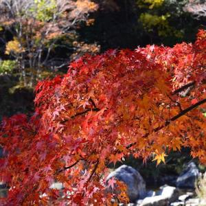 香嵐渓 東海随一の紅葉の名所