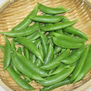 スナップエンドウの収穫