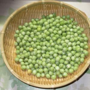 グリンピースの収穫