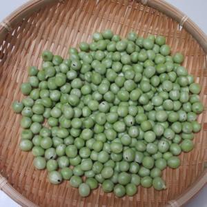 エンドウ豆 & スナップエンドウの収穫