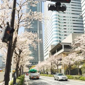 春たけなわ プラスして 富士山