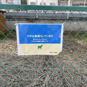 伊東駅のヤギ、続報♪
