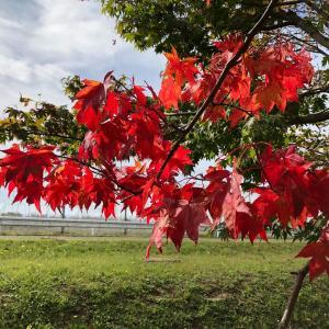 ●秋の楽しみ●