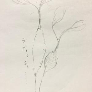 急遽!明日ラディッシュ販売&かご展最終日!