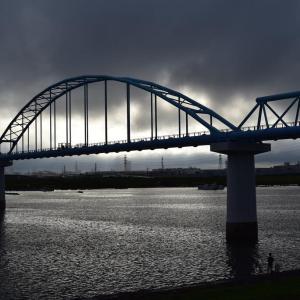 江戸川のハゼが成長していました