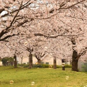 桜花賞は1点買いですです