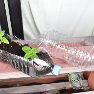 ペットボトルで植木鉢を作る
