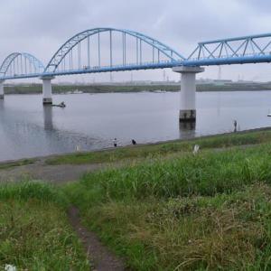 雨上がりの江戸川放水路へハゼ釣りにGO