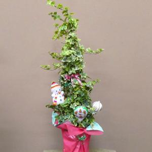 メリークリスマス アイビーのツリー