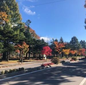 紅葉渋滞。