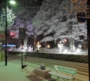 雪が降っています!