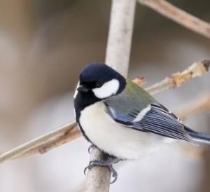 野鳥が活発な季節になってきました!