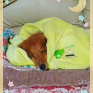 最近よく寝るモモ~(^^)/