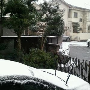 初雪だね~