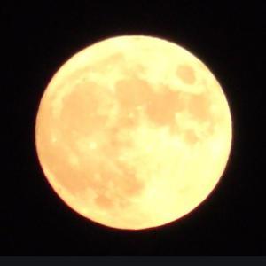 8月満月の重版キャンペーン