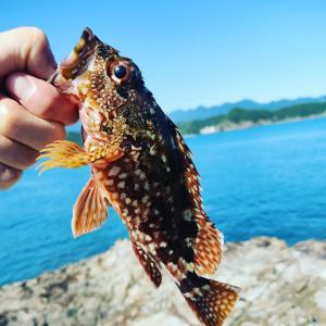 息子と釣りに行ってきました
