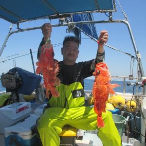 14日木曜オニカサゴ、17日日曜泳がせ出船しました。