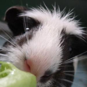 治一郎のバウムクーヘンって美味しいと思うわけ。