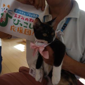 奄美の子猫たち