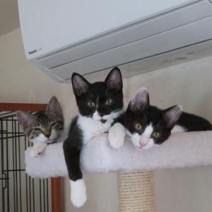 東大和市・地域猫セミナーのお知らせ