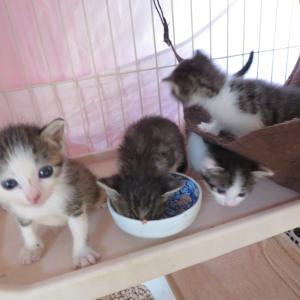 獣医師と考えるTNR(猫ボラ育成プログラム4)