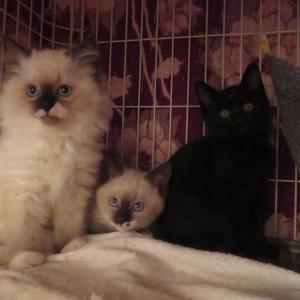 かわいい猫が20匹以上います