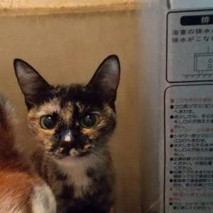 保護ボランティアが犬猫虐待疑い(NHKニュース)