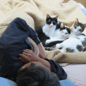 慣れない猫の慣らし方