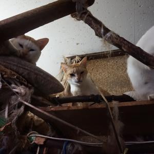 SOS!猫11匹・その10飼い猫までの道のり