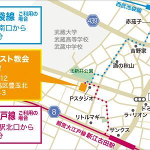 11/24(日)譲渡会・参加ねこ一覧
