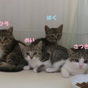 猫の駆除は違法です