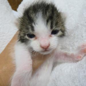 猫の赤ちゃん成長日記