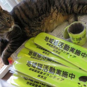 猫ボラ活動を