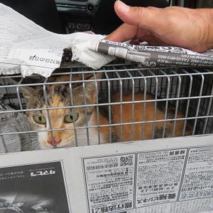 猫ボランティアの地域格差