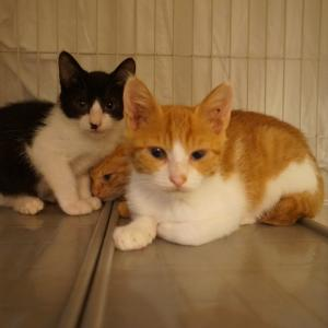 繁殖現場の子猫たち