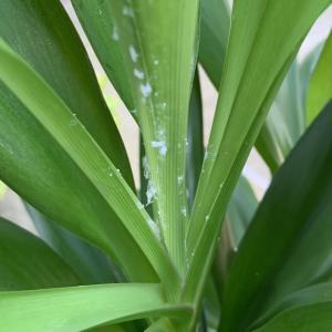 観葉植物にとっての悪さをする虫。