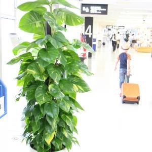 気が付くと30年、観葉植物に関わって仕事をしています。