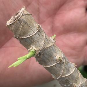 観葉植物 管理の3つの秘訣