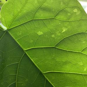 観葉植物 害虫と益虫の違いについて考えました。