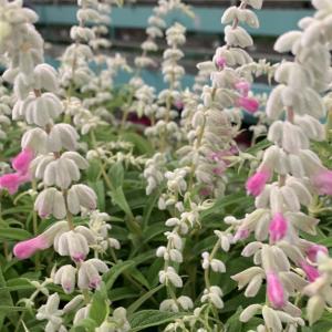 市場情報 季節のお花がたくさん出荷してありました。
