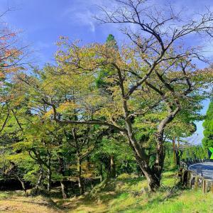 紅葉シーズン!阿蘇山上も色づき始めましたよ。