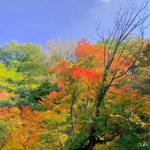 マゼノ渓谷の紅葉は綺麗だった。