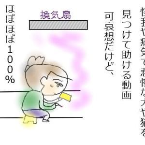 子猫を拾うまでの話(4)