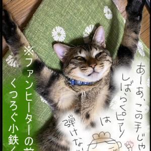 子猫を拾うまでの話(9)