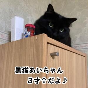 ネコ飼いの宿命