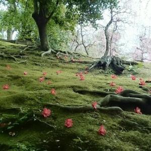 京都~落ち椿と梅花