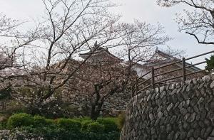 お城の桜は?